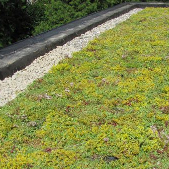 Groen dak Turnhout